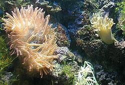 Anemone.bristol.   750pix.jpg