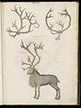Animal drawings collected by Felix Platter, p2 - (130).jpg