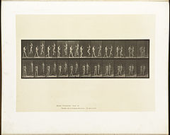Animal locomotion. Plate 448 (Boston Public Library).jpg