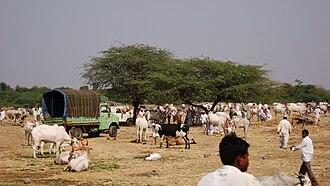 Sangole - Animals Market