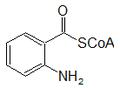 Antraniloil CoA.png