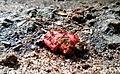 Ants at a crab apple picnic.jpg