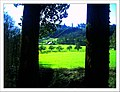 April Hochschwarzwald Freiburg im Breisgau - Mythos Black Forest Photography 2013 - panoramio (6).jpg