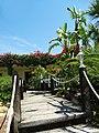 Armona Island (Portugal) - 49744888943.jpg