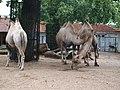 Artis Zoo, Amsterdam (7621140484).jpg