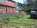 At ve bahçe.JPG