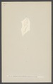 Attagenus - Print - Iconographia Zoologica - Special Collections University of Amsterdam - UBAINV0274 001 03 0046.tif