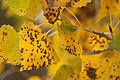 Autumn Leaves (6550015039).jpg