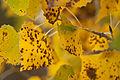 Autumn Leaves (6550015039).jpg