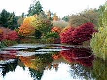 Bon Autumn Colours At VanDusen Botanical Garden, 2011
