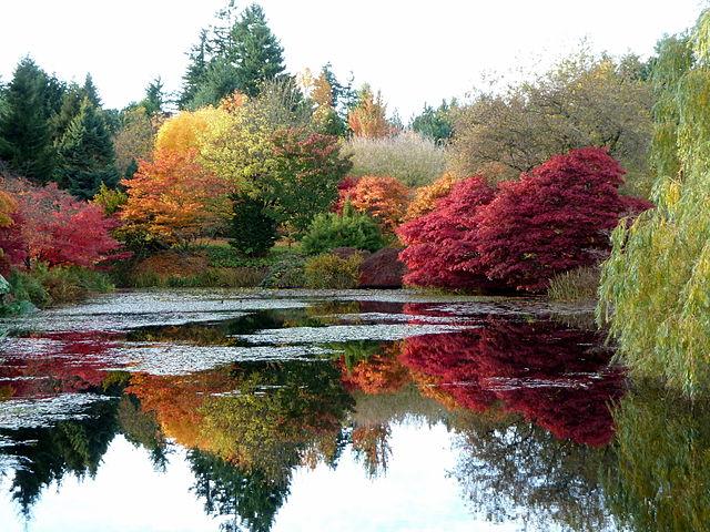 Okrasné dreviny v botanickej záhrade (Vancouver, Canada)