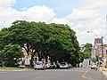 Avenida Major Nicácio , Franca (SP), Brasil 13012019.jpg