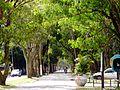 Avenida Rio Grande.JPG
