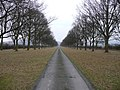 Avenue at Linley Hall - geograph.org.uk - 652490.jpg