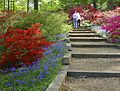 Azalea garden at the National Arboretum.jpg