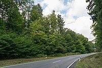 Bad Wünnenberg - 2017-09-16 - Leiberger Wald (1).jpg
