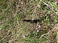 Barbed Wire and ground spear (21660113425).jpg