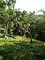 Batangasjf9369 25.JPG