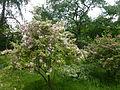 Baumschulenweg Späth-Arboretum 07.JPG