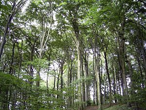 Stratification (vegetation) - View of the canopy and understory beneath