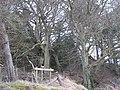 Beecraigs Woods - geograph.org.uk - 1175842.jpg