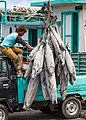 Benoa Bali Indonesia Unloading-Tuna-in-Benoa-Harbour-04.jpg