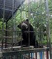 Beruang Madu.jpg