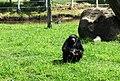 Beto Carrero Zoo - panoramio (4).jpg