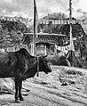 Bhutan (8026023152).jpg