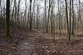 Big Hill Pond State Park Trail 6.jpg