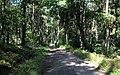 Bike trail between Grabacz and Kopaniarze - panoramio (2).jpg