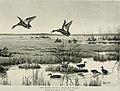Bird-lore (1909) (14749370862).jpg