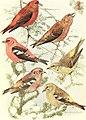 Bird lore (1912) (14727754796).jpg