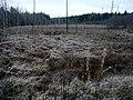 Black River. First Snow Река Черная. Первый снег - panoramio.jpg