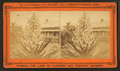 Blossom from the Spanish bayonet, from Robert N. Dennis collection of stereoscopic views 3.png