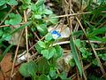 Blue flowers 1.JPG