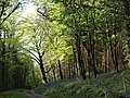 Bluebells by Beadon Bridge - geograph.org.uk - 1299659.jpg