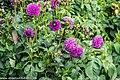 Botanic Gardens In Glasnevin (Dublin) (7951844336).jpg