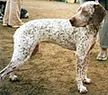 Bourbonnais Pointer 3.jpg