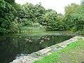 Broad Mills Pond - geograph.org.uk - 905617.jpg