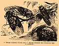 Brockhaus and Efron Encyclopedic Dictionary b75 157-0.jpg