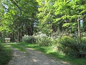Brooks Woodland Preserve, Petersham MA.jpg