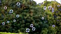 Bubble machine soap bubbles at Staplefield, West Sussex, England 03.jpg