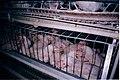 Buckeye crowded (4017696455).jpg