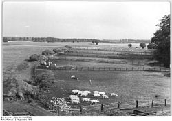 Bundesarchiv Bild 183-21087-0001, Volkseigenes Gut Gross-Stieten.jpg