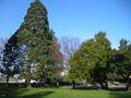 Burlingame washington park5.JPG