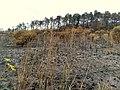 Bushfire in Prospect Hill.jpg