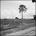 CH-NB - Belgisch-Kongo, Thysville (Mbanza Ngungu)- Landschaft - Annemarie Schwarzenbach - SLA-Schwarzenbach-A-5-26-023.jpg