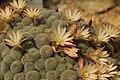 Cactus (41352719475).jpg