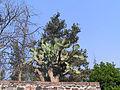 Cactus in Mexico.jpg